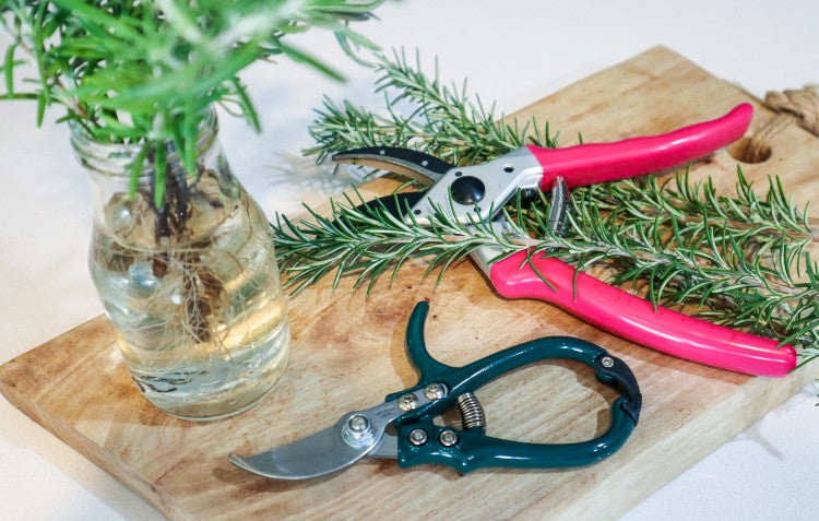 hoselink-secateurs-and-handy-snippers
