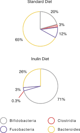 Inulin Diet