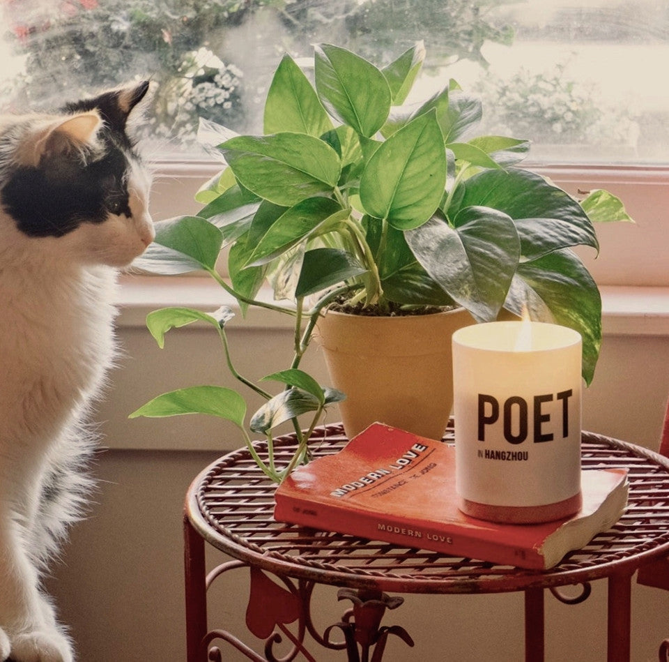 Candle and Cat by Nomad Noé
