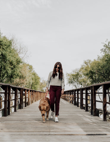 Dog Walking Essentials Its Benefits For You and Your Dog