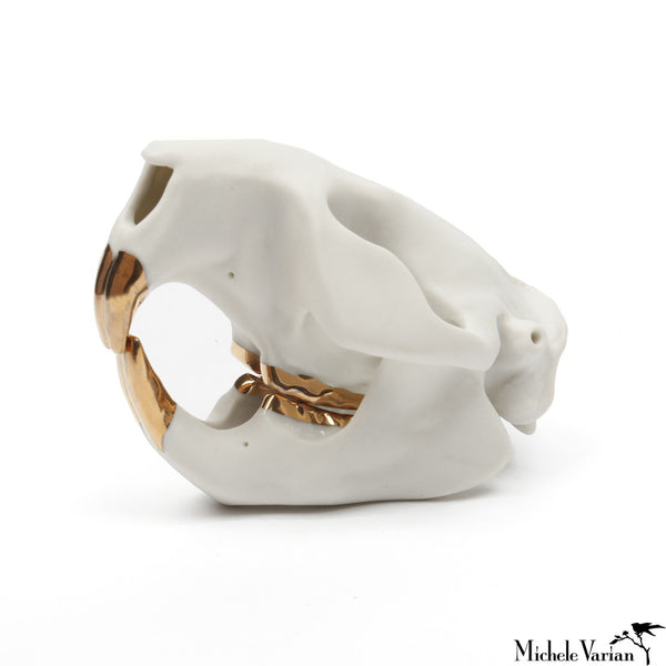 Beaver Skull Porcelain Gold Teeth