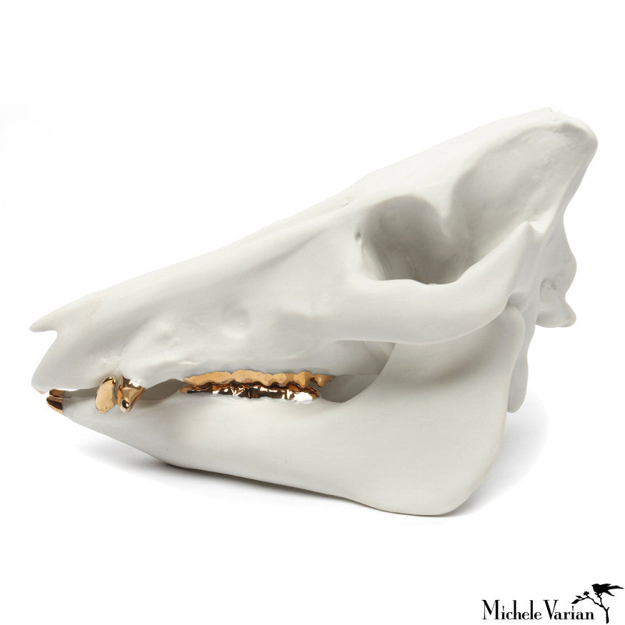 Wild Boar Skull Porcelain Gold Teeth