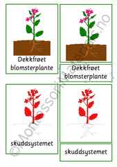 Blomsterplantens deler