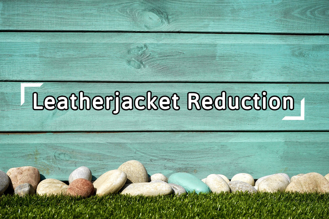 Nematodes for Leatherjacket Reduction