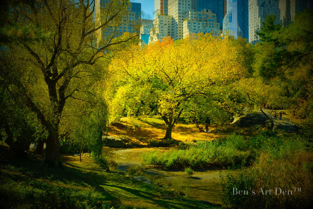 Lone Tree, Central Park