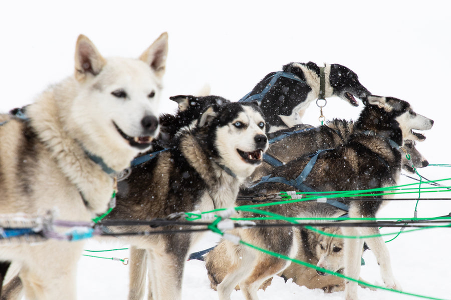 Bucket List Check #18 - Dogsledding in Big Sky, MT