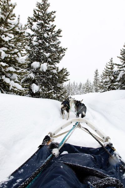 Dog Sledding in Big Sky Montana
