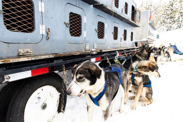 Trailer for Huskies in Big Sky Montana