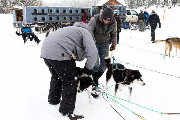 Mike Hooking Up The Huskies For Our Dogsled Experience in Big Sky Montana