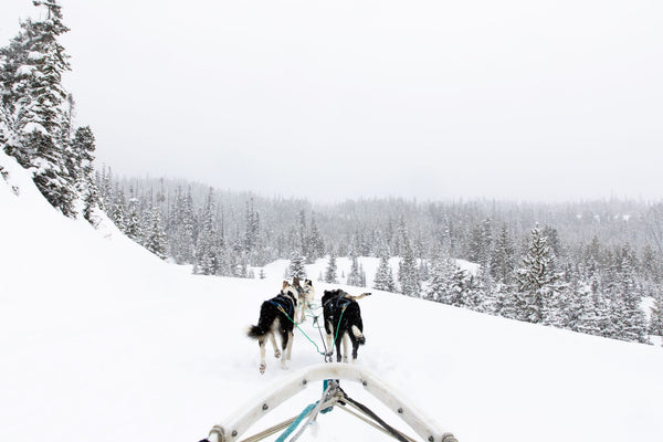 Dogsledding in Big Sky Montana