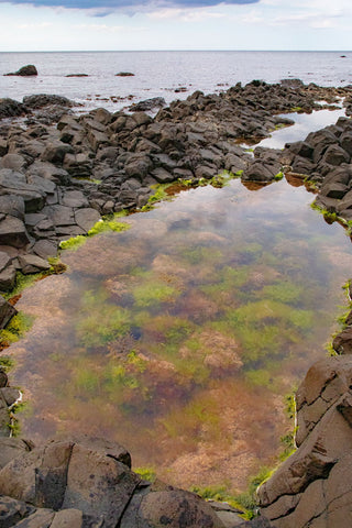 Tidal Pools at Giants Causeway Northern Ireland