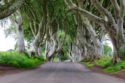 My Photograph of the Dark Hedges