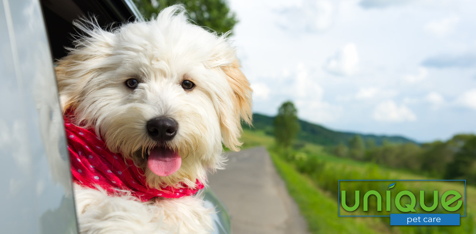 How to Remove Pet Odor From Your Car