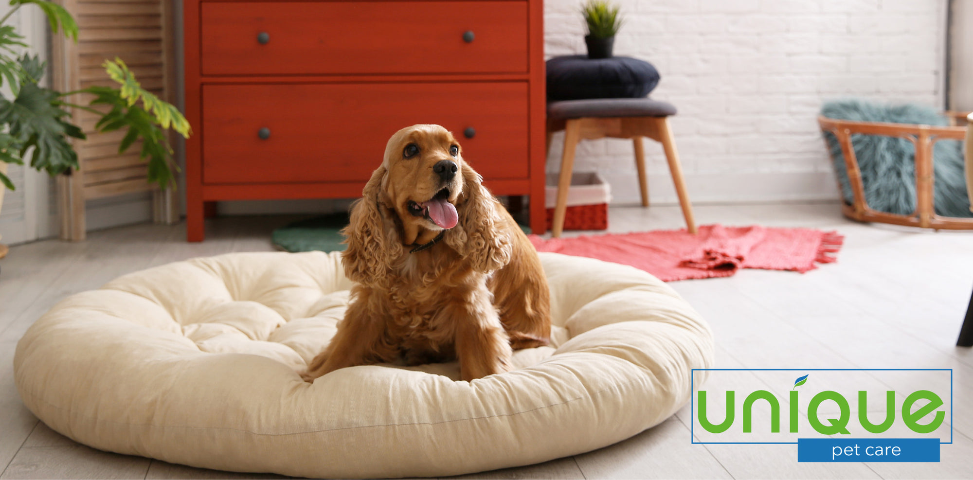 How To Clean Pet Beds
