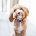 Unique Pet Care Testimonials. See what Felix has to say about our products.