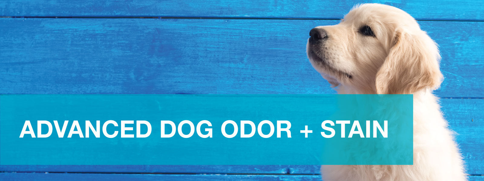 Advanced Dog Odor + Stain Remover works to remove residue old and new - Unique Pet Care