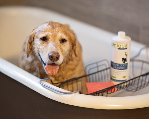 Dog in bathtub being washed with Unique Skunk Odor Remover