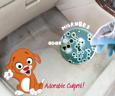 picture of microbe in fllor of a car with a cartoon puppy