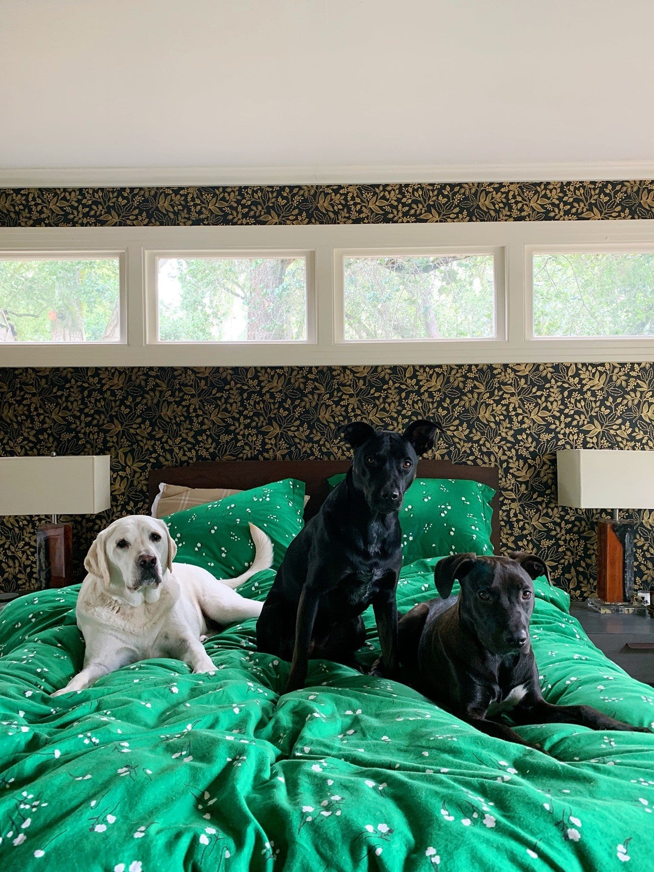 Take Your Dog to Work Day | Wildflower Emerald bedding | Charlotte Janvier | Hygge & West