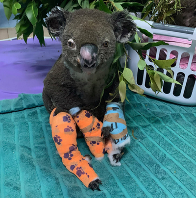 Lewis the Koala Memorial Coming to United Nations in NYC