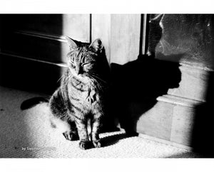 Kosmo Foto Mono, 35mm, Black and White Film