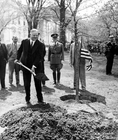 Herbert Hoover Planting a Tree for Arbor Day. Image courtesy of Nebraska Education Location
