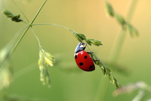 control pests and insects in the garden