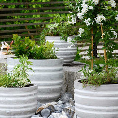 Light colored pots stay cooler in summer