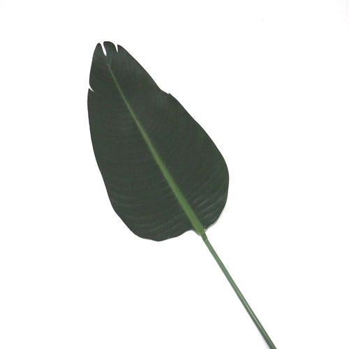 Artificial Plant Supplier - Giant Strelizia Leaf