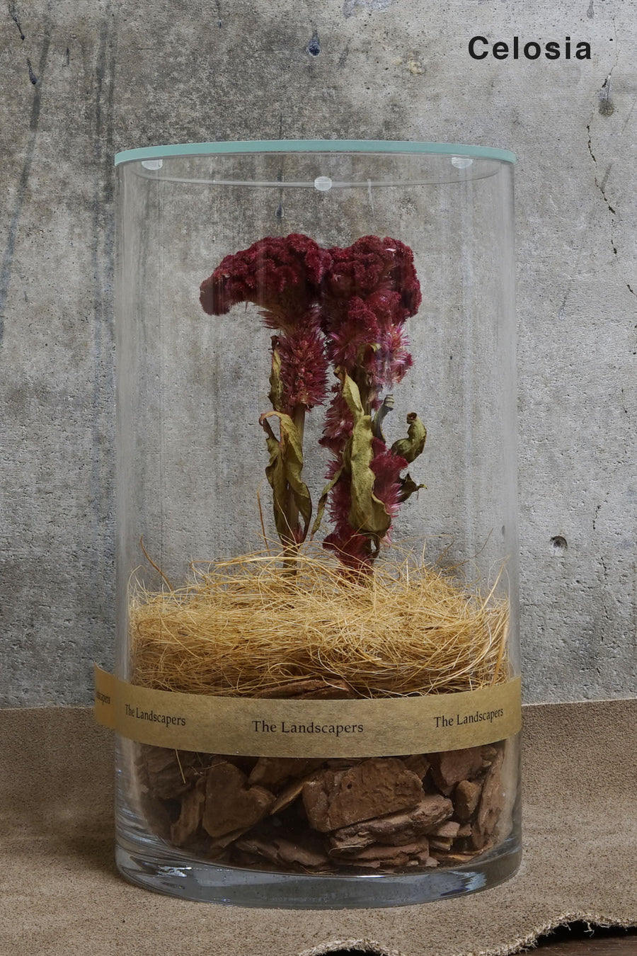 The Landscapers -DC 20 with LID Wood- CELOSIA