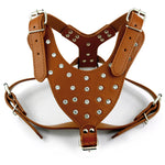 Diamond Studded Harness