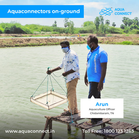 Dissolved Oxygen (DO) in the water is essential for successful shrimp/fish farming
