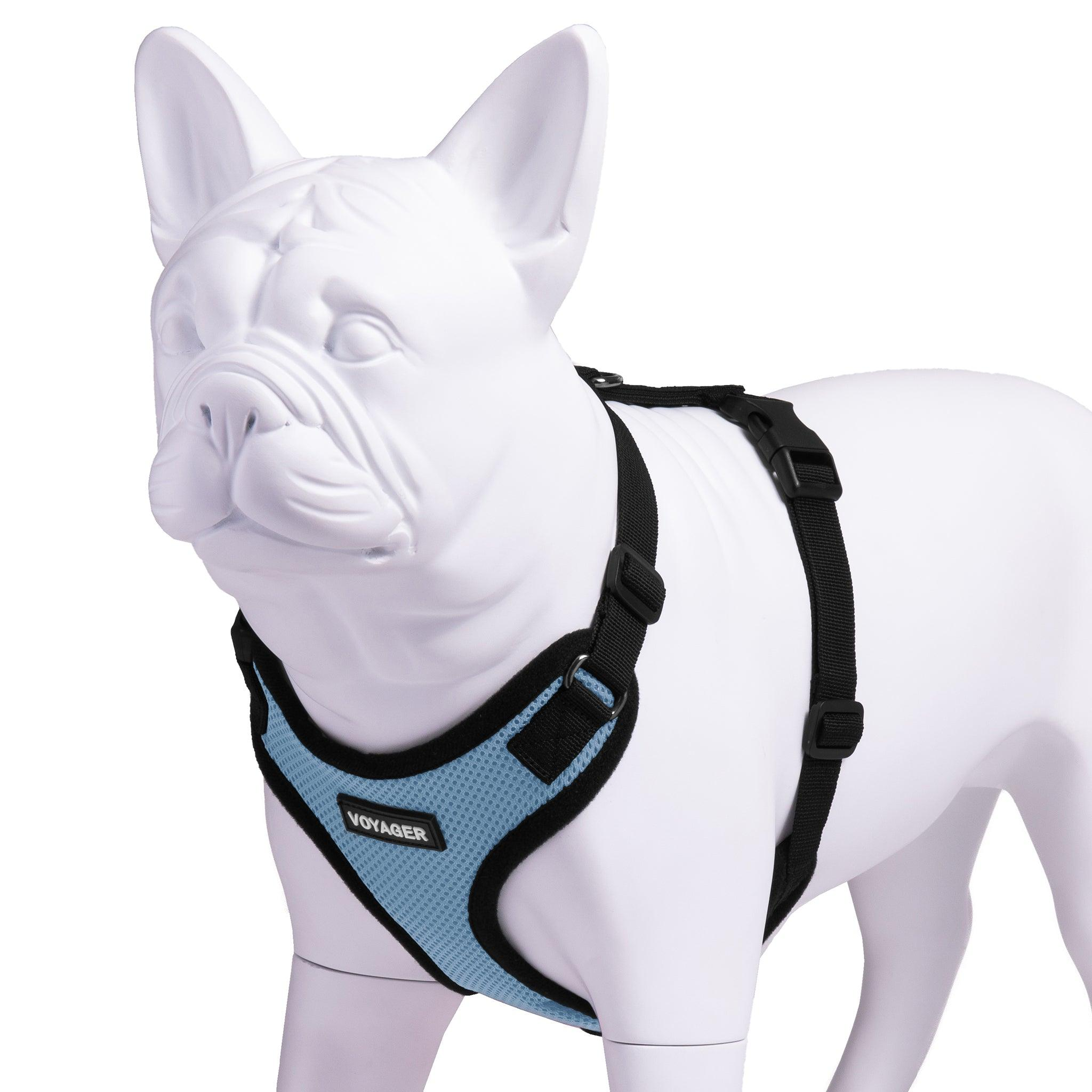VOYAGER Step-In Lock Dog Harness in Baby Blue with Black Trim and Webbing - Expanded