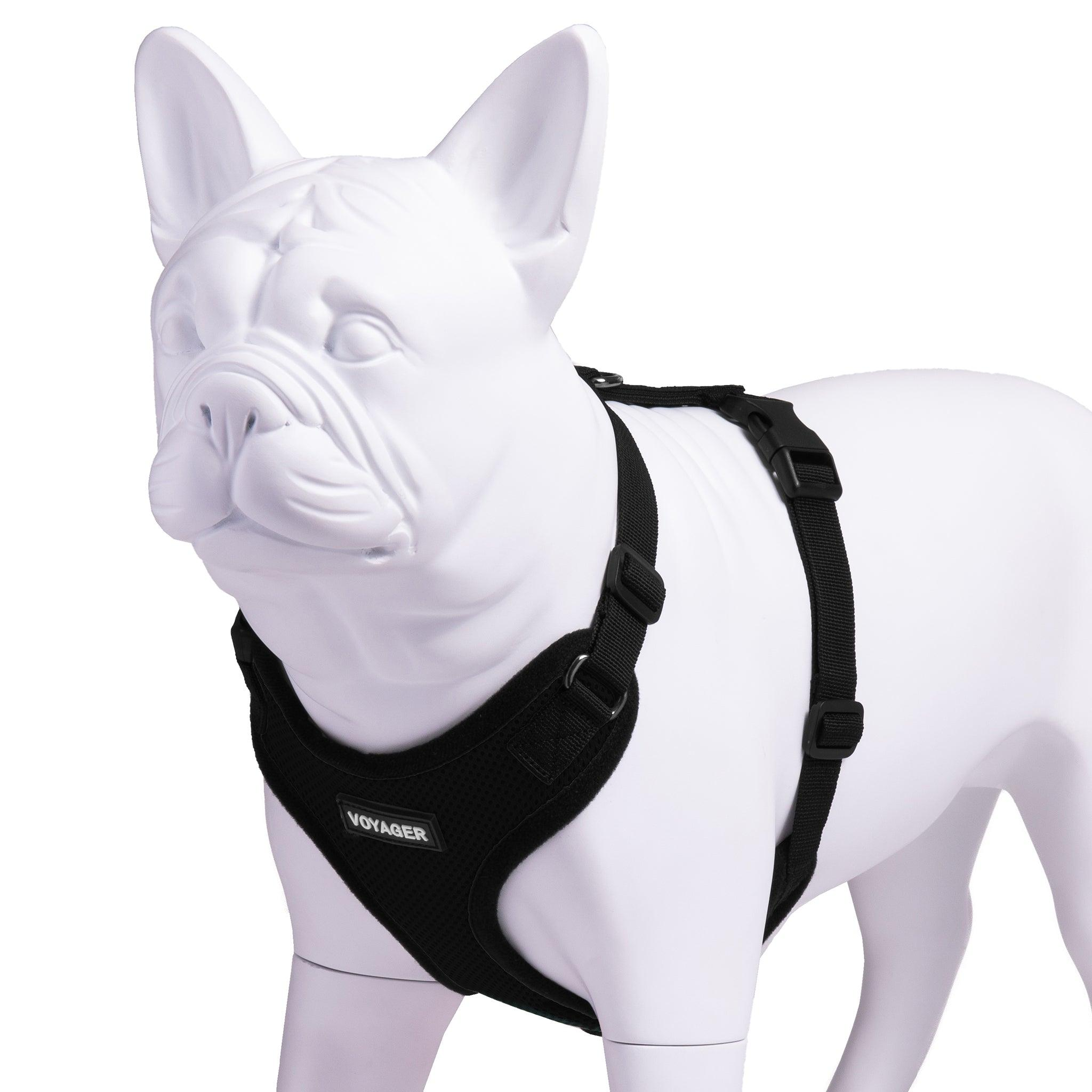 VOYAGER Step-In Lock Dog Harness in Black with Matching Trim and Webbing - Expanded