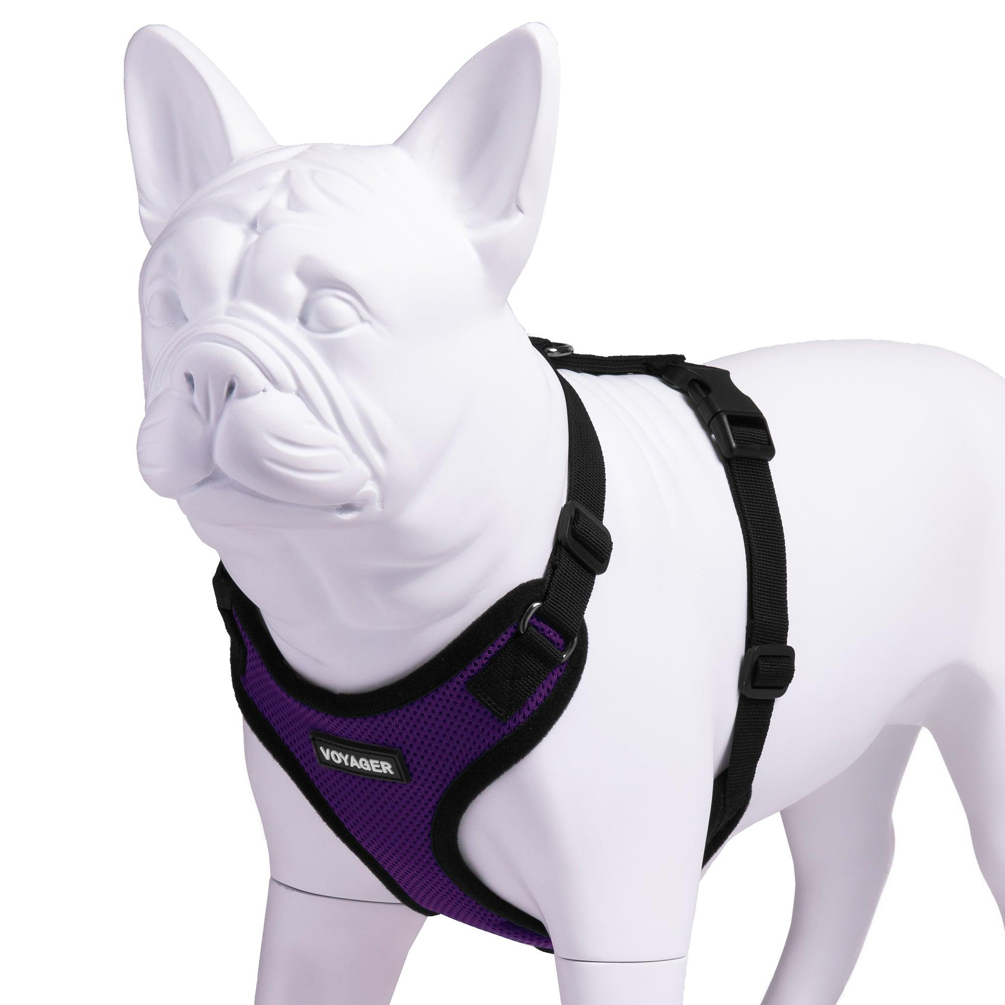 VOYAGER Step-In Lock Dog Harness in Purple with Black Trim and Webbing - Expanded
