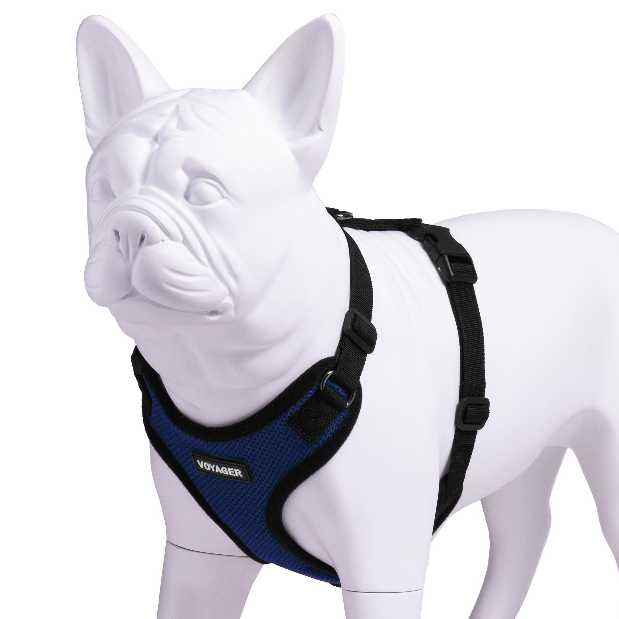 VOYAGER Step-In Lock Dog Harness in Royal Blue with Black Trim and Webbing - Expanded