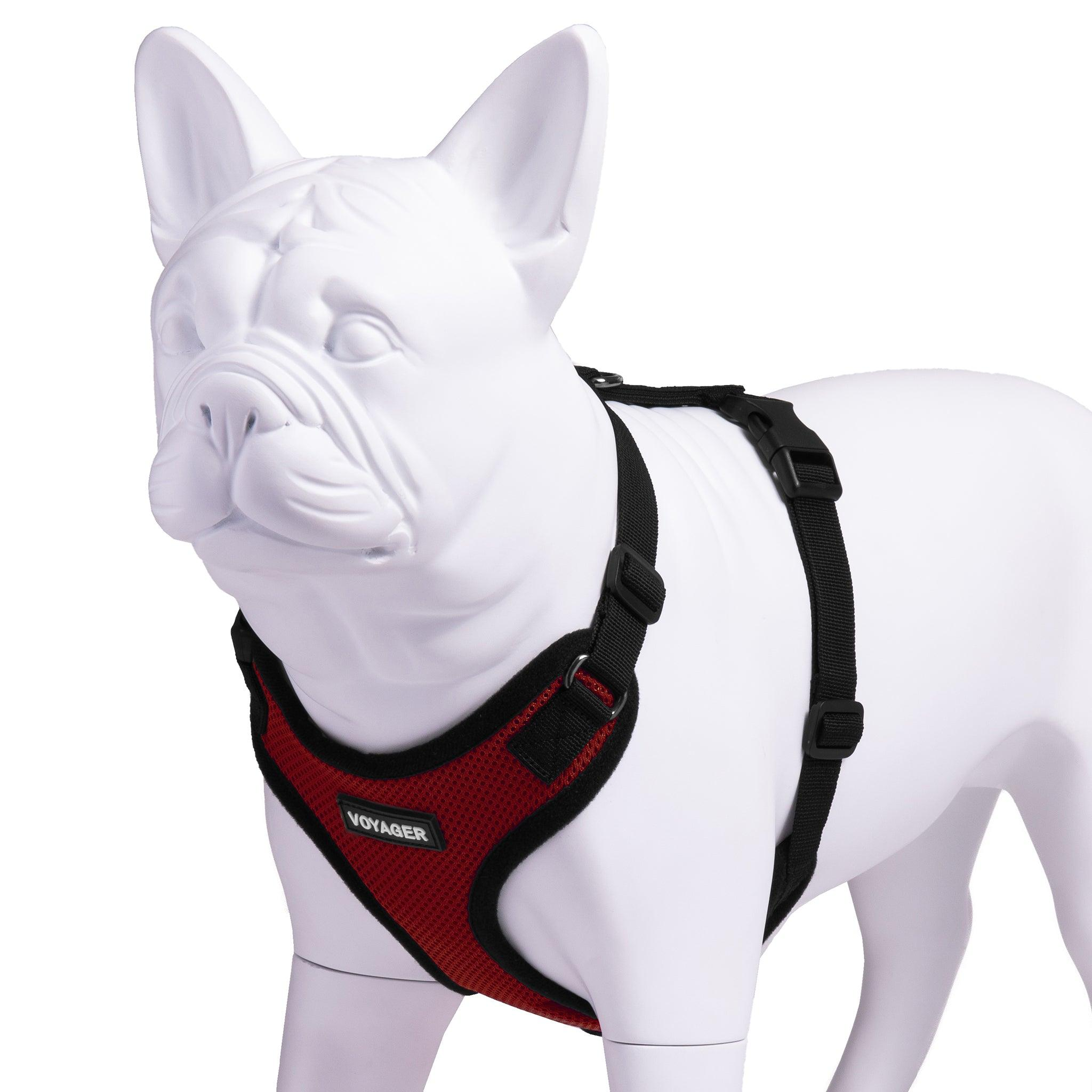VOYAGER Step-In Lock Dog Harness in Red with Black Trim and Webbing - Expanded