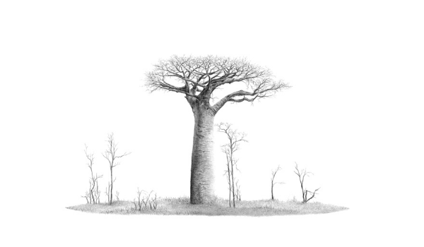 African Baobab Tree - On Canvas