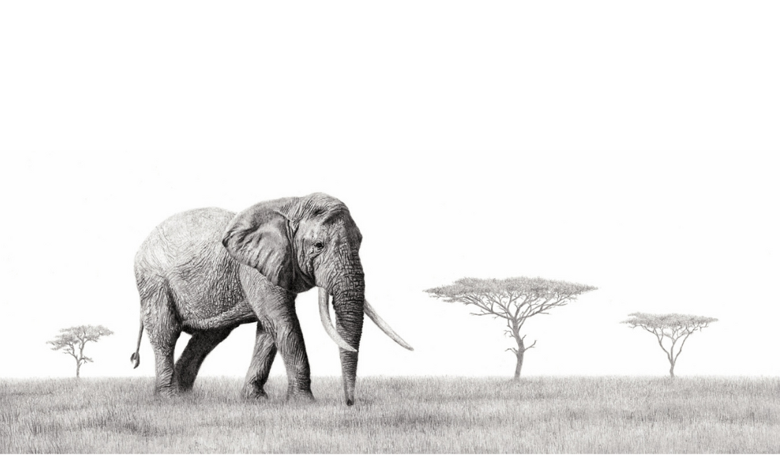 African Elephant - On Canvas