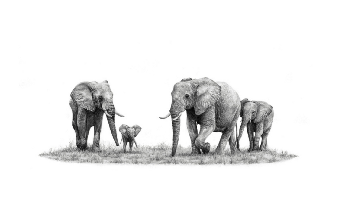 African Elephants - On Canvas