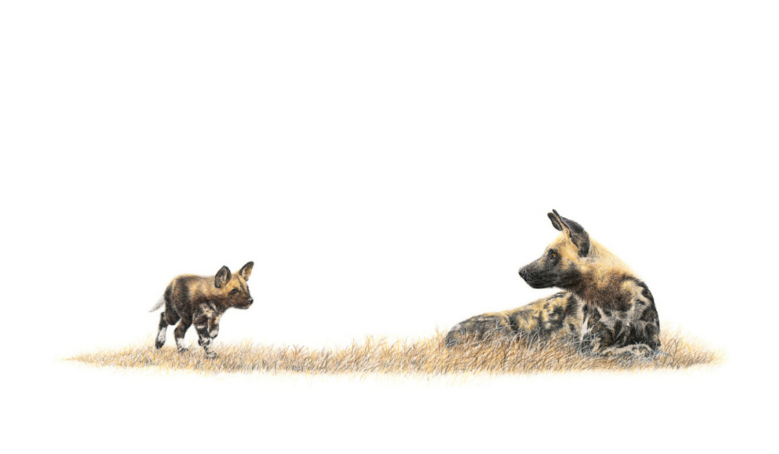 African Wild Dogs - On Canvas