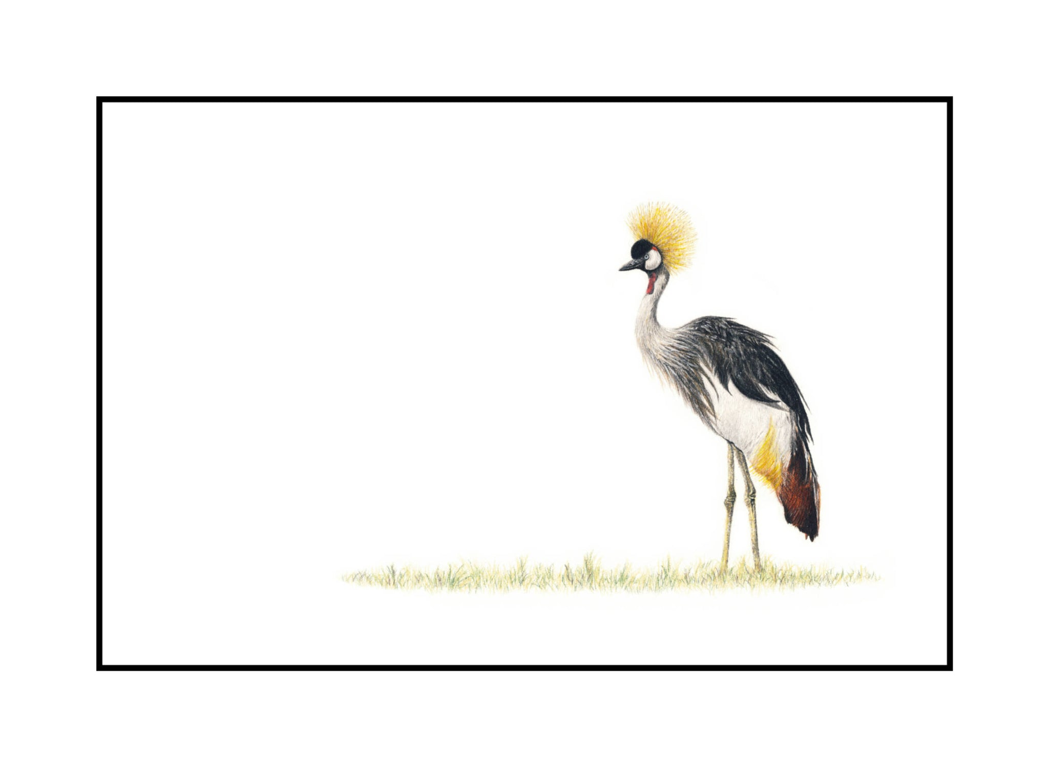 Crowned Crane (CC)