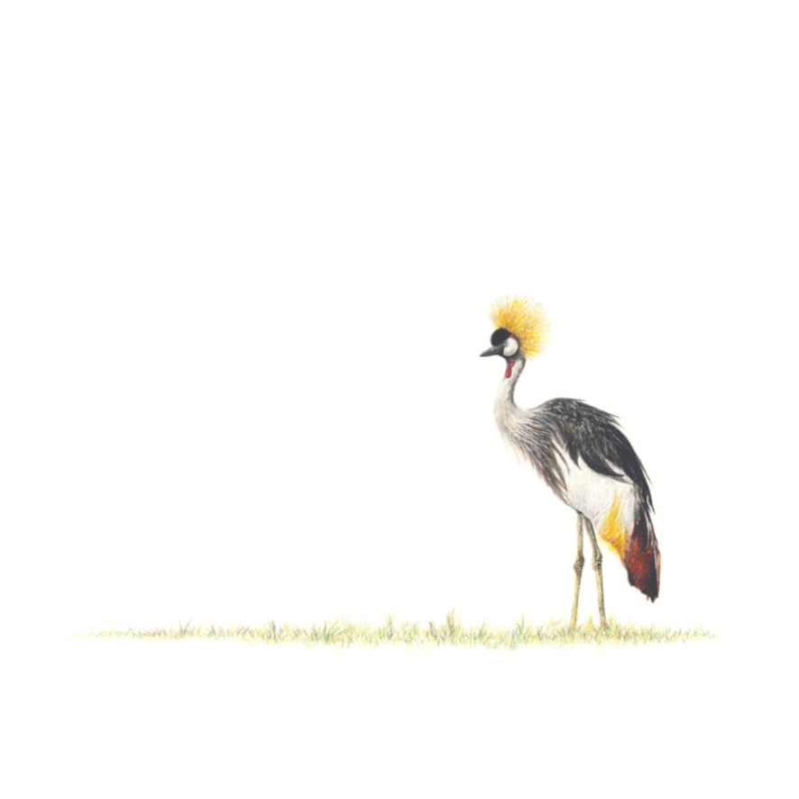 Crowned Crane - On Canvas
