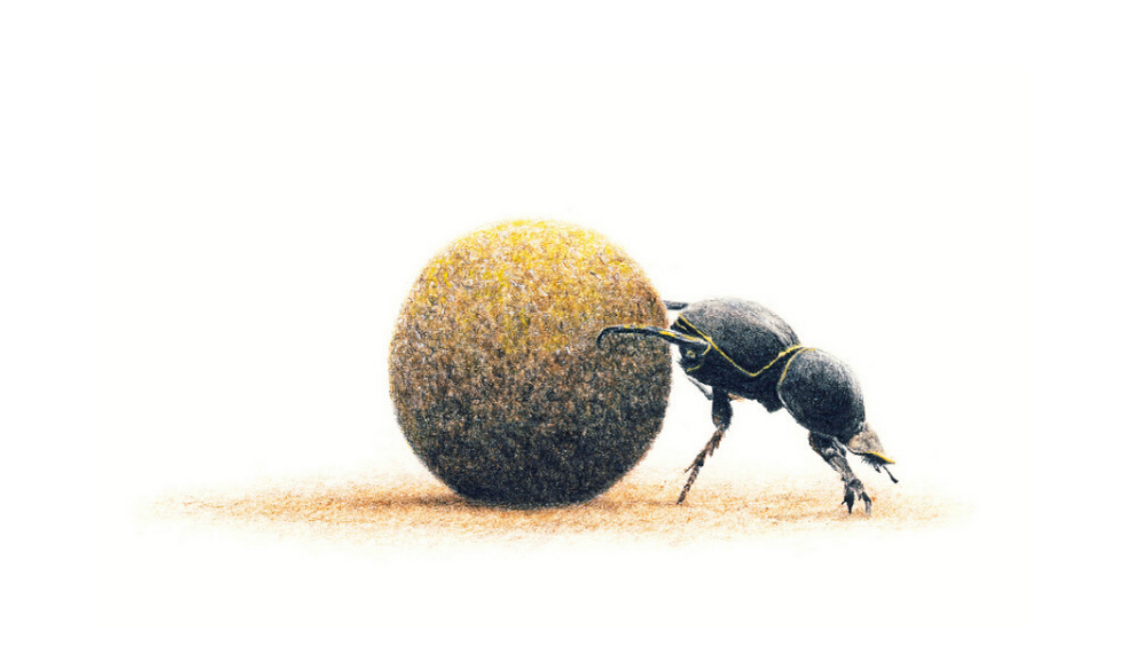 Dung Beetle - On Canvas