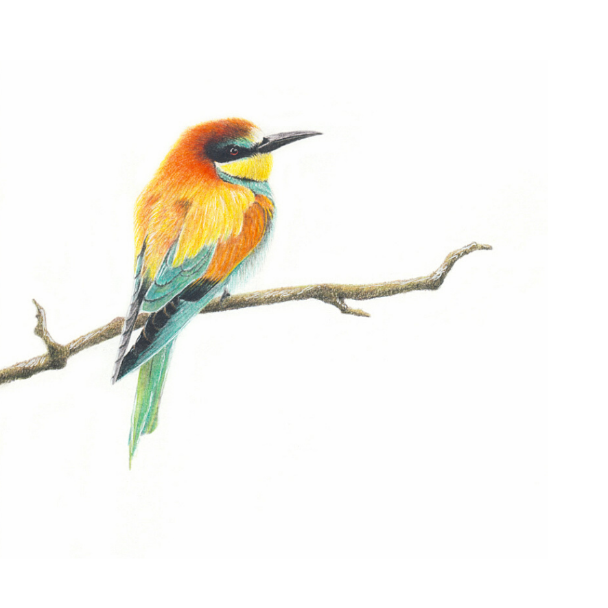 European Bee Eater - On Canvas