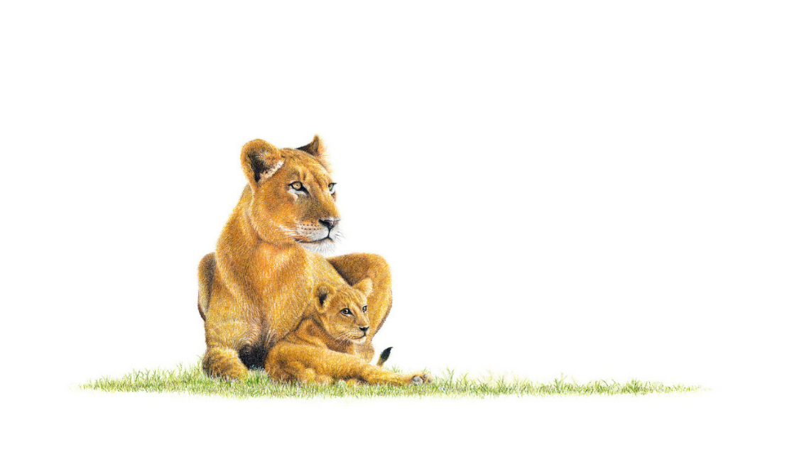 Lioness With Cub - On Canvas