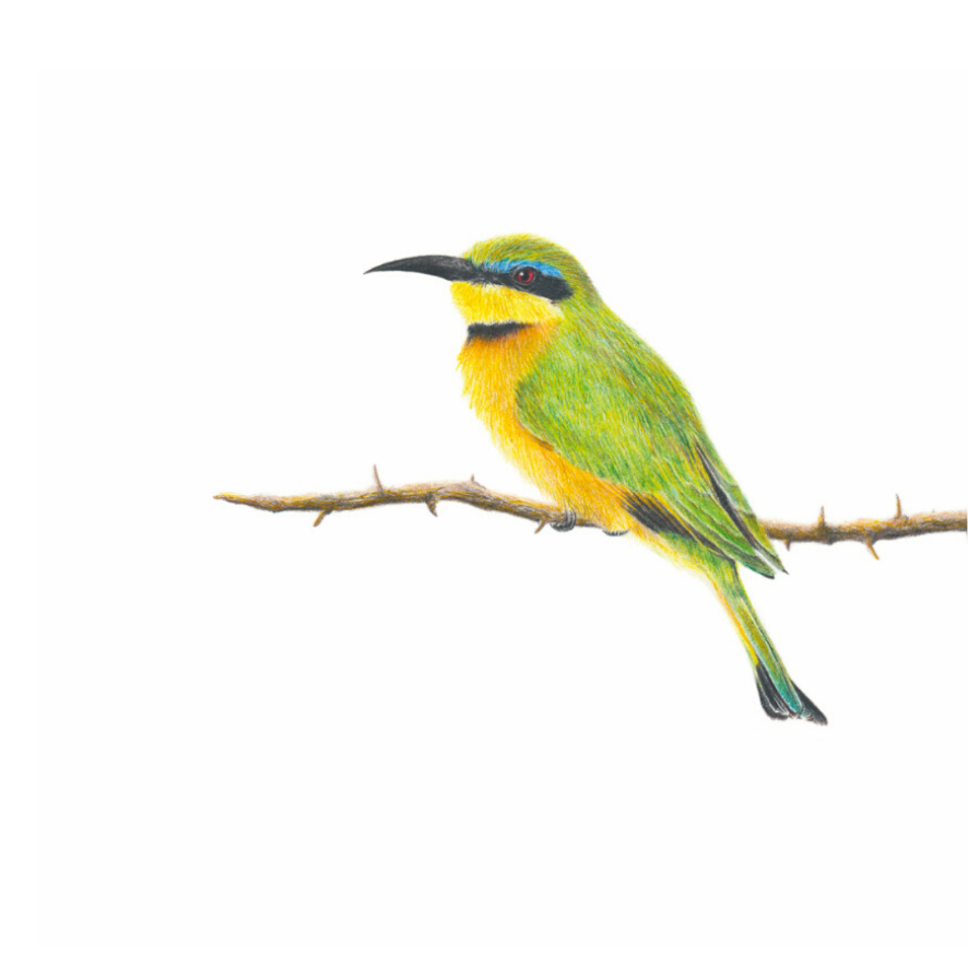 Little Bee Eater - On Canvas