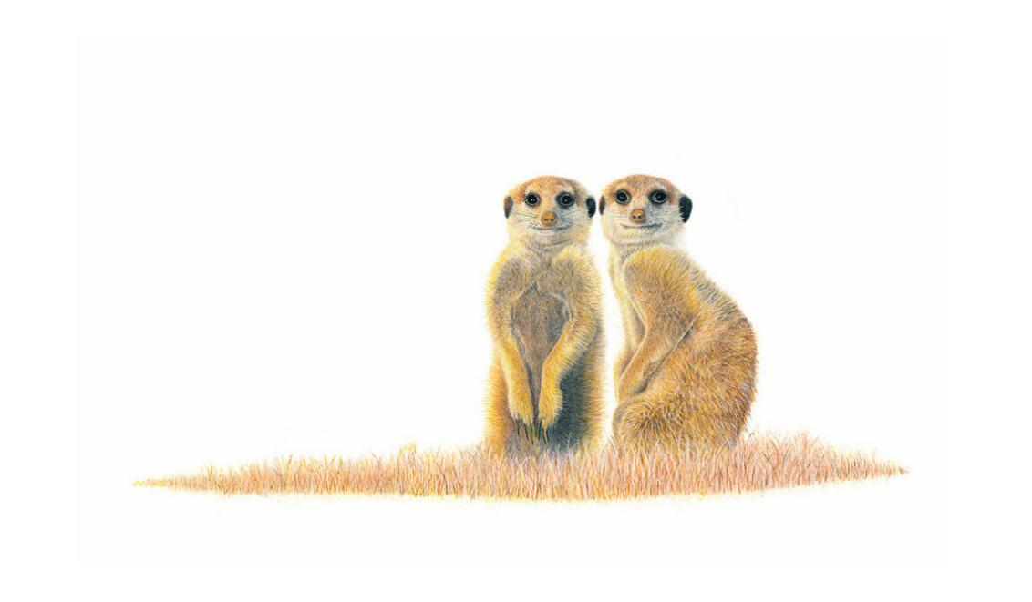 Meerkats - On Canvas