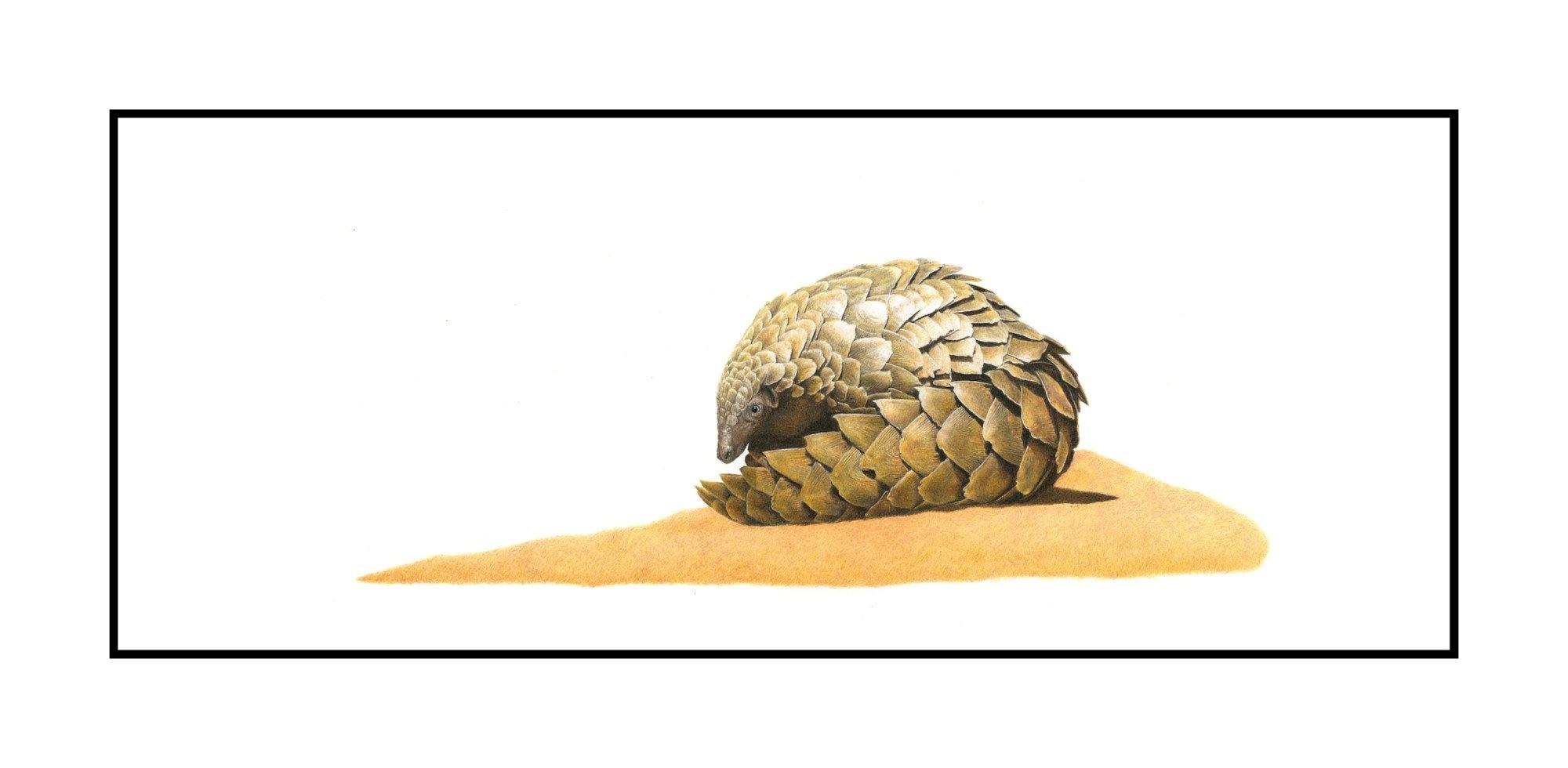 Pangolin 2 - The Original - Framed