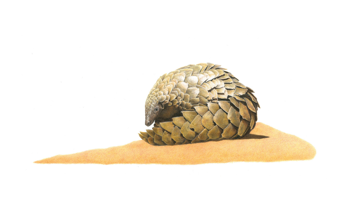 Pangolin - On Canvas